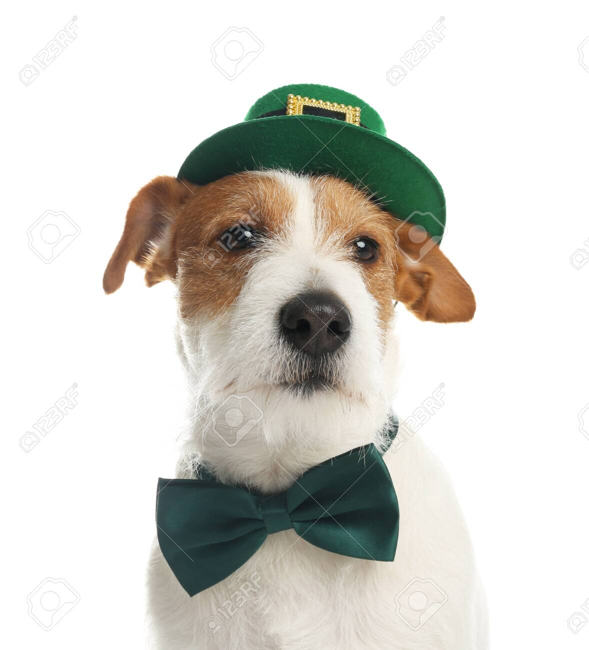 Jack Russell terrier with leprechaun hat and bow tie on white background. St. Patrick's Day - 142058144