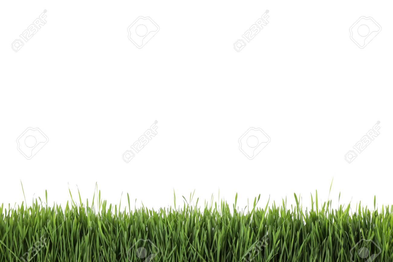 Fresh green grass on white background. Spring season - 143299354