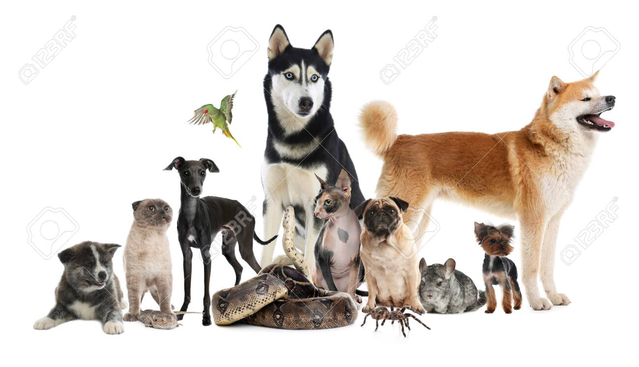 Group of different pets on white background. Banner design - 144032961