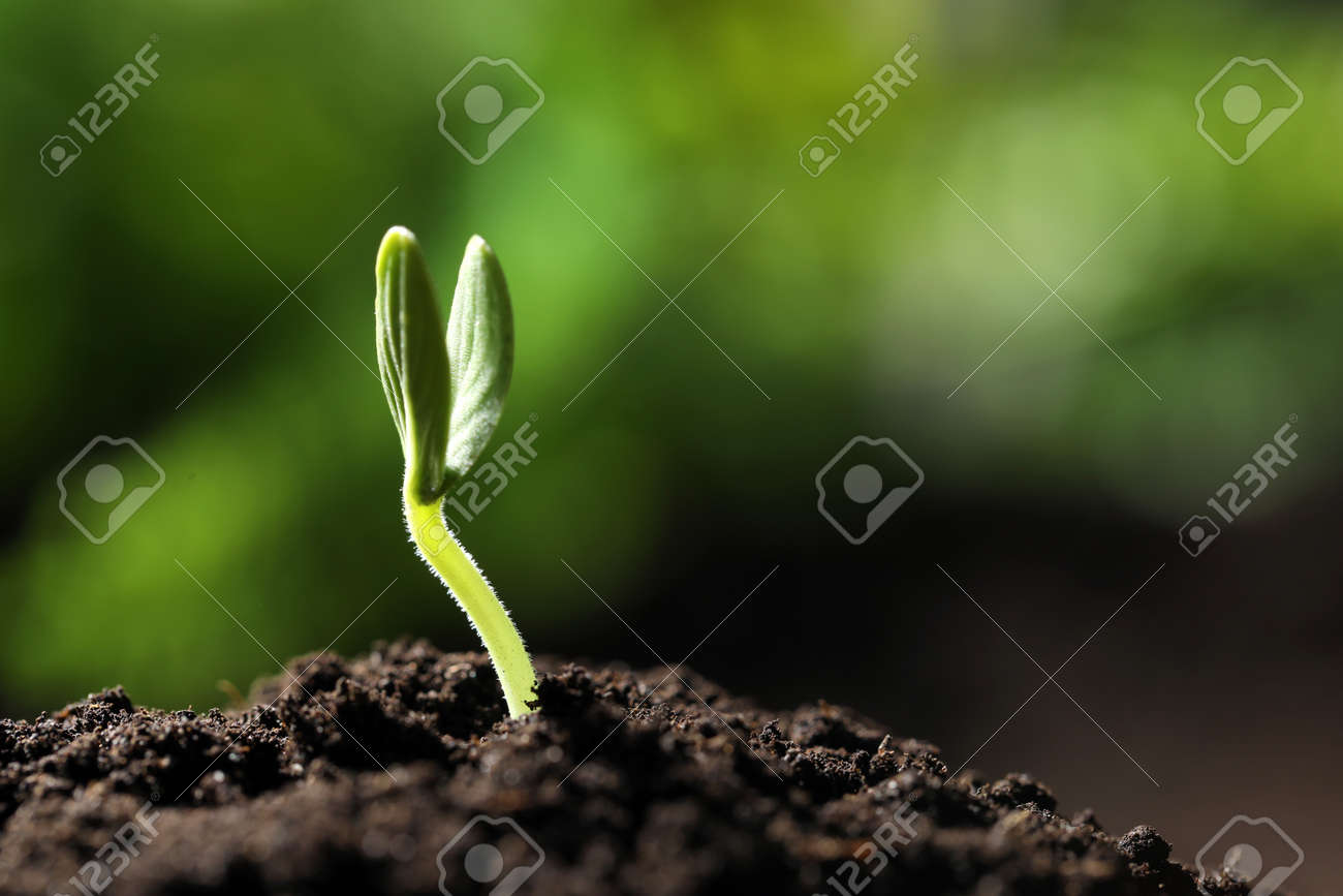 Little green seedling growing in soil, closeup. Space for text - 144939055
