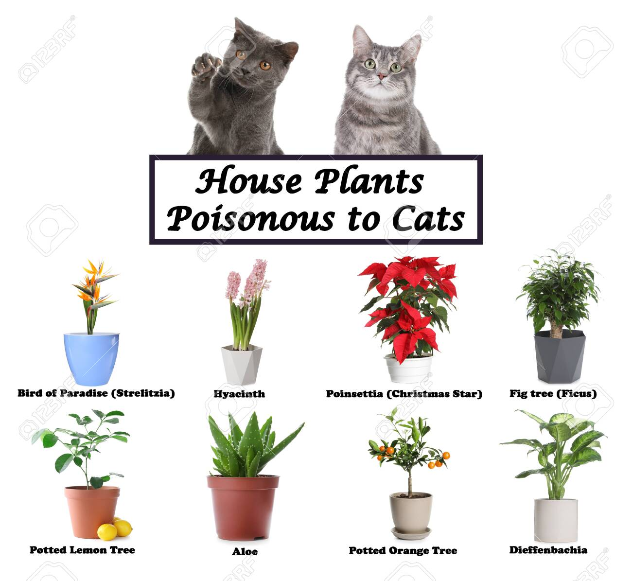 Set Of House Plants Poisonous To Cats And Kittens On White Background Stock Photo Picture And Royalty Free Image Image 145231728
