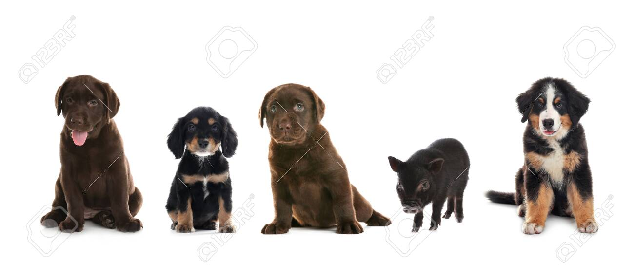 Collage with different adorable baby animals on white background. Banner design - 146606830