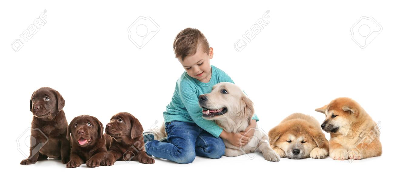 Cute Little Child With His Pets On White Background Banner Design Stock Photo Picture And Royalty Free Image Image 147521837