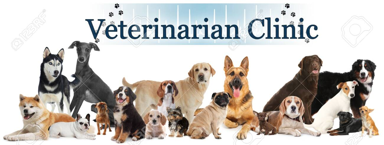Collage With Different Cute Pets And Text Veterinarian Clinic Stock Photo Picture And Royalty Free Image Image 147916432