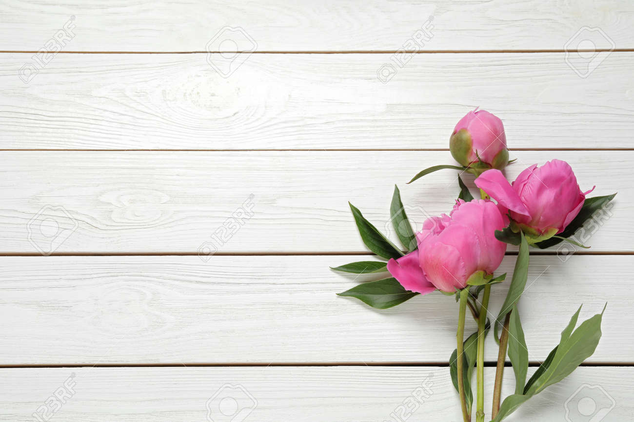 Beautiful pink peonies on white wooden background, flat lay. Space for text - 153049623