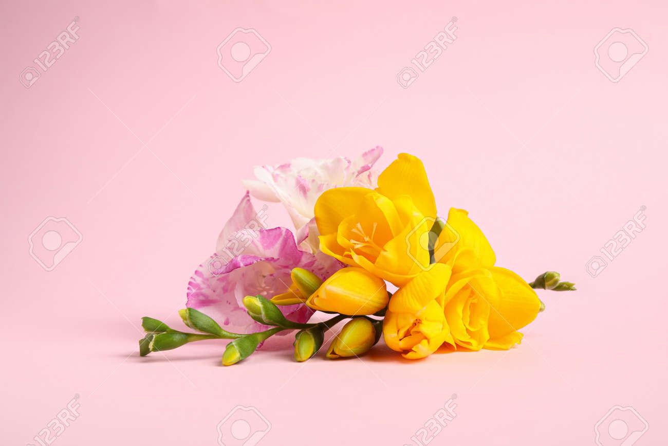 Beautiful blooming freesia flowers on pink background - 153842531