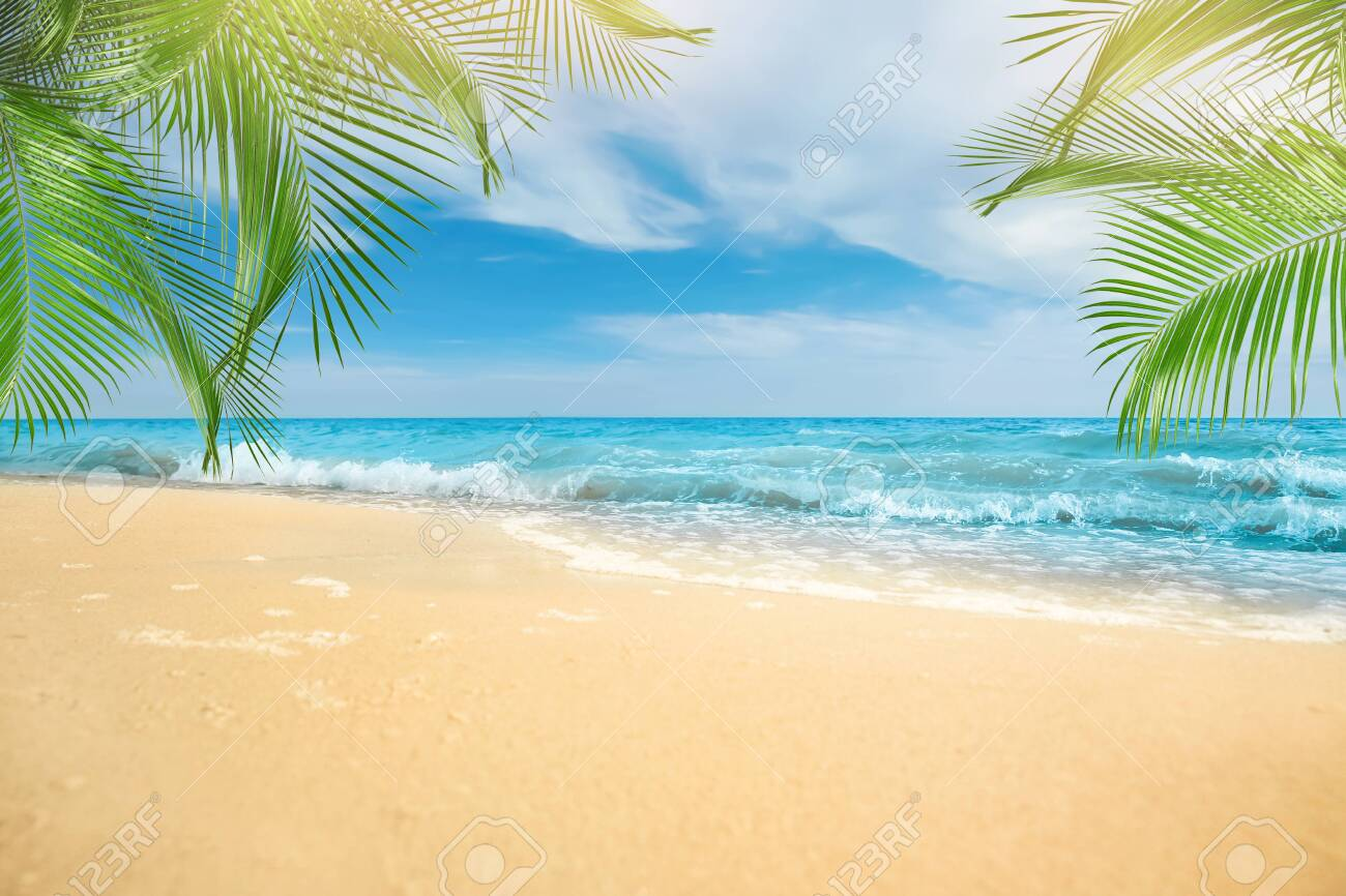 Sandy beach with palms near ocean on sunny day - 154919806