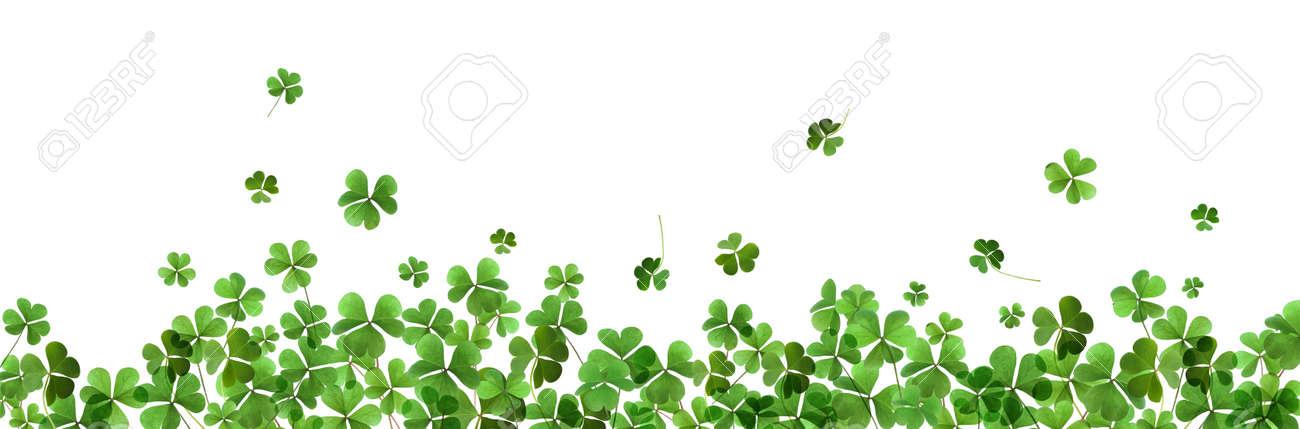 Fresh green clover leaves on white background, banner design. St. Patrick's Day - 163911627