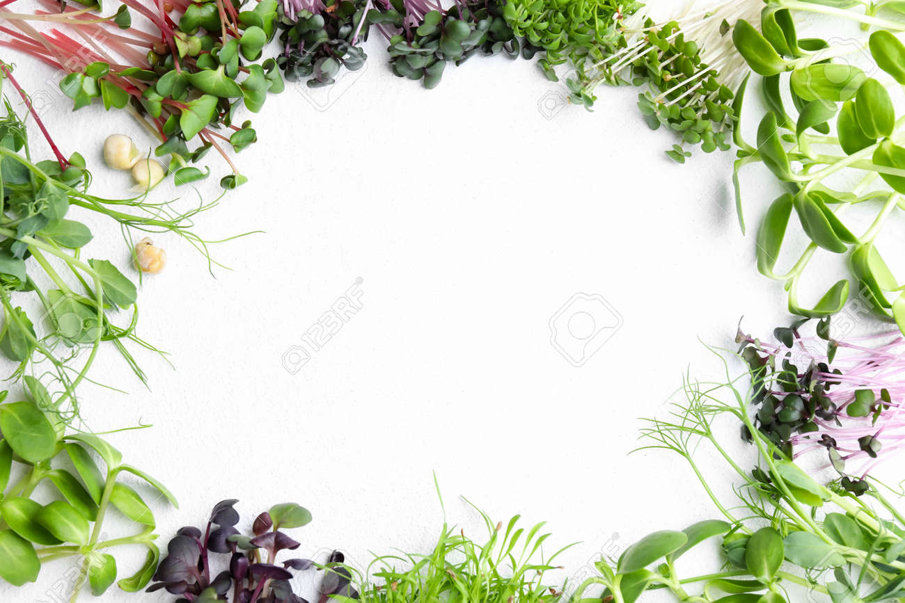 Frame made with different microgreens on white table, flat lay. Space for text - 165455888