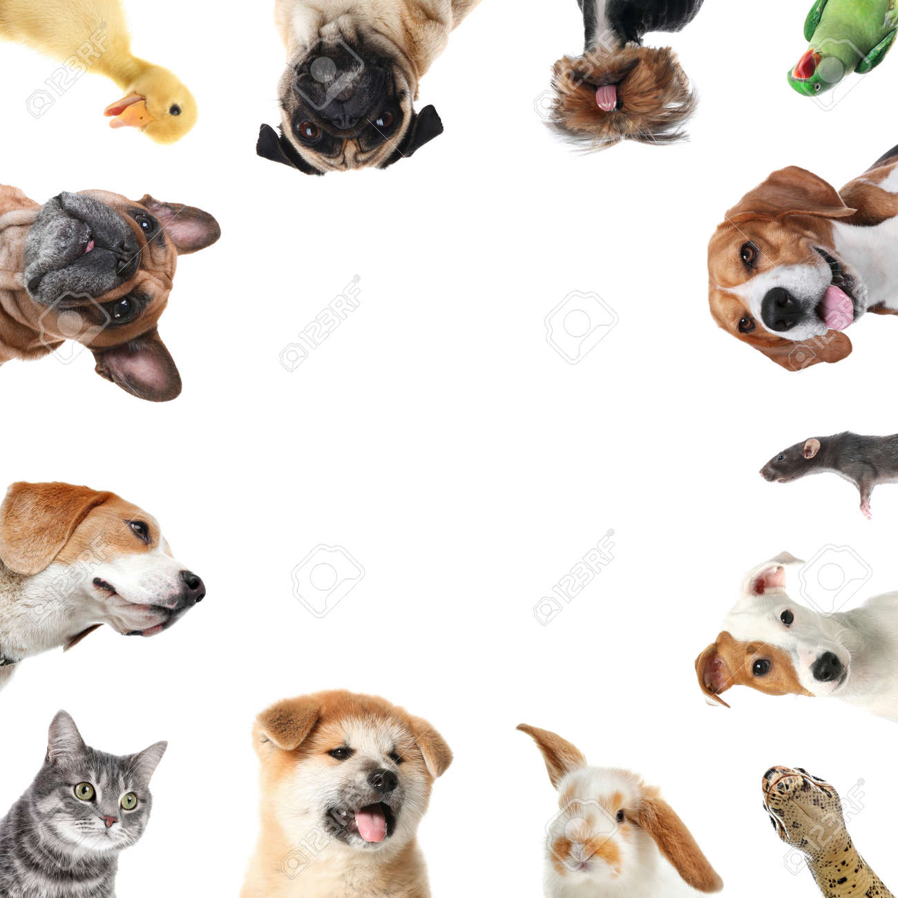 Cute different animals on white background, collage - 167715551
