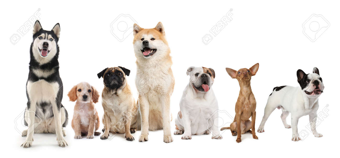 Group of different cute dogs on white background. Banner design - 167901696