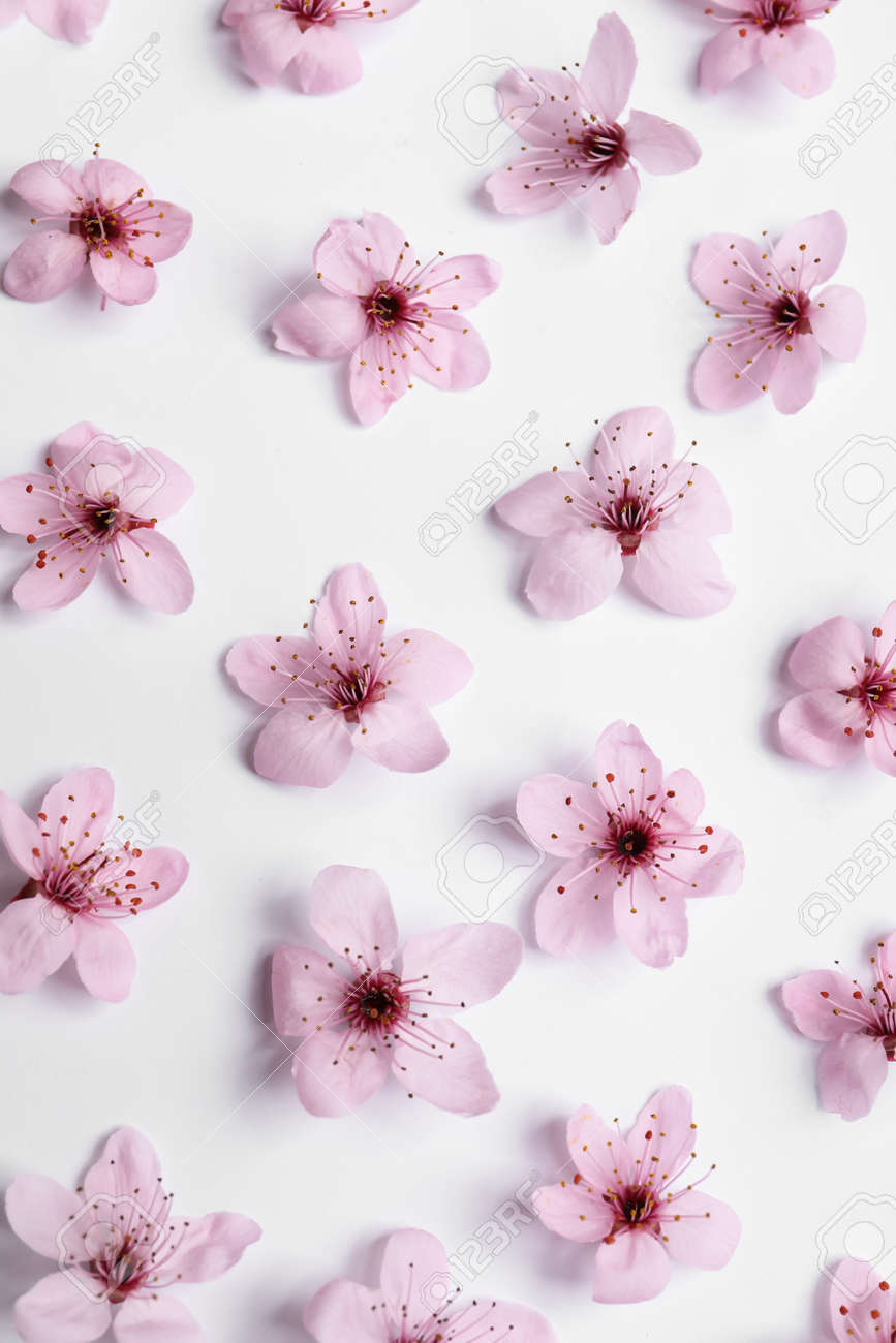 Beautiful spring tree blossoms on white background, flat lay - 168164496