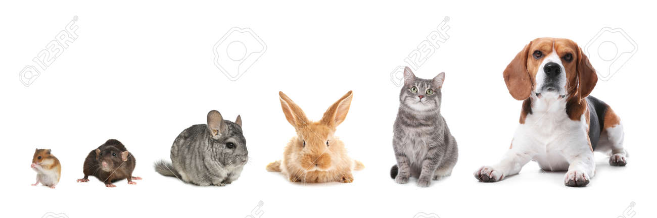 Group of different domestic animals on white background, collage. Banner design - 168463138