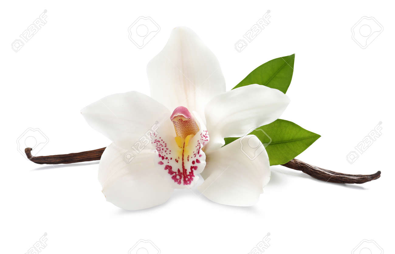 Aromatic vanilla sticks, beautiful orchid flower and green leaves on white background - 169837062