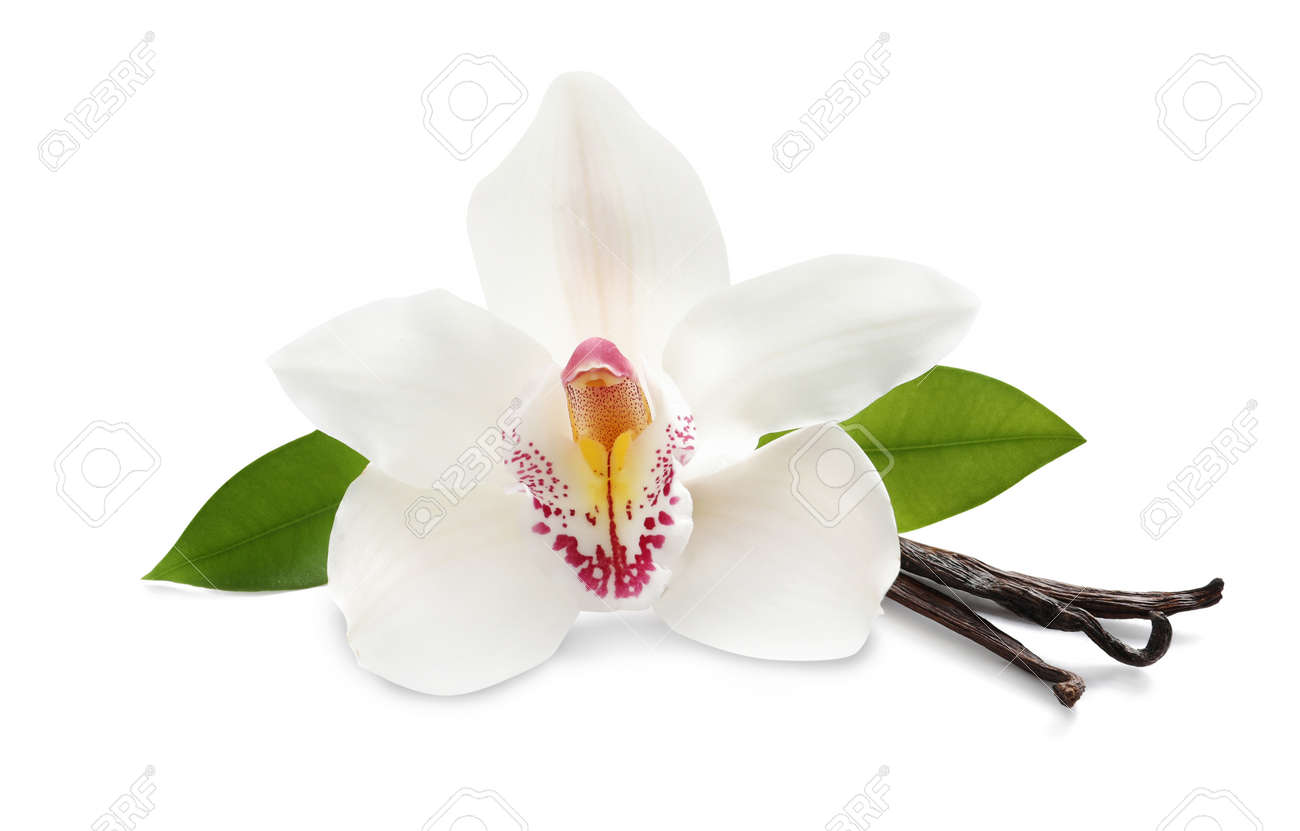 Aromatic vanilla sticks, beautiful orchid flower and green leaves on white background - 169914990