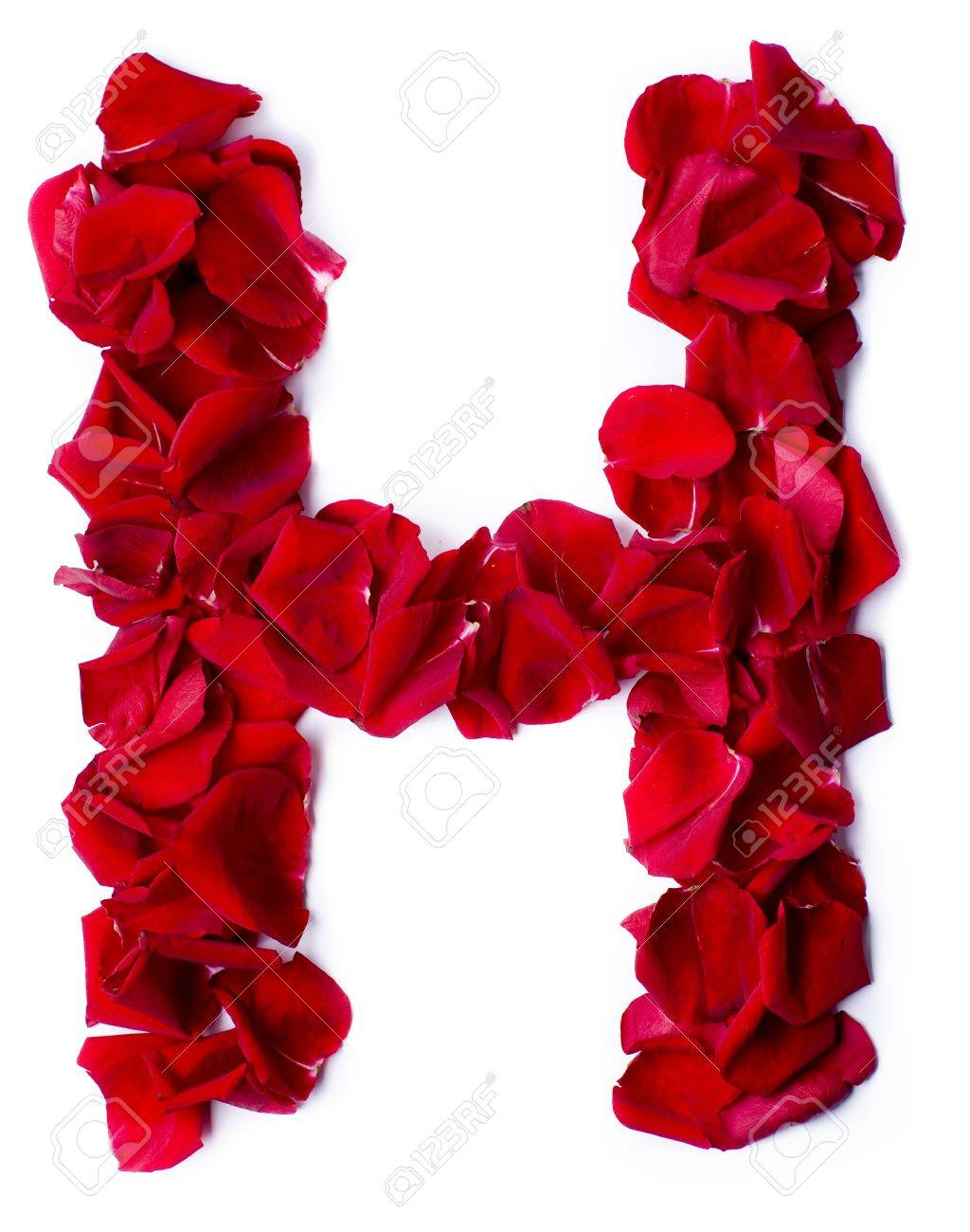 H letter alphabet from pink petals of rose vector by