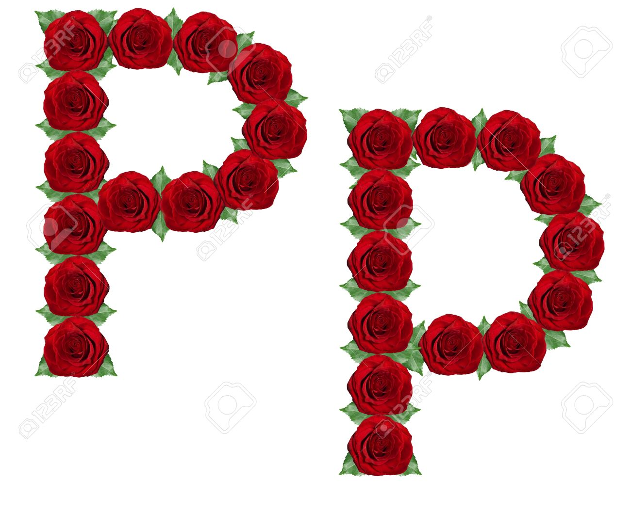 Alphabet Letter P Made From Red Roses And Green Leaves Isolated On A White Background Stock