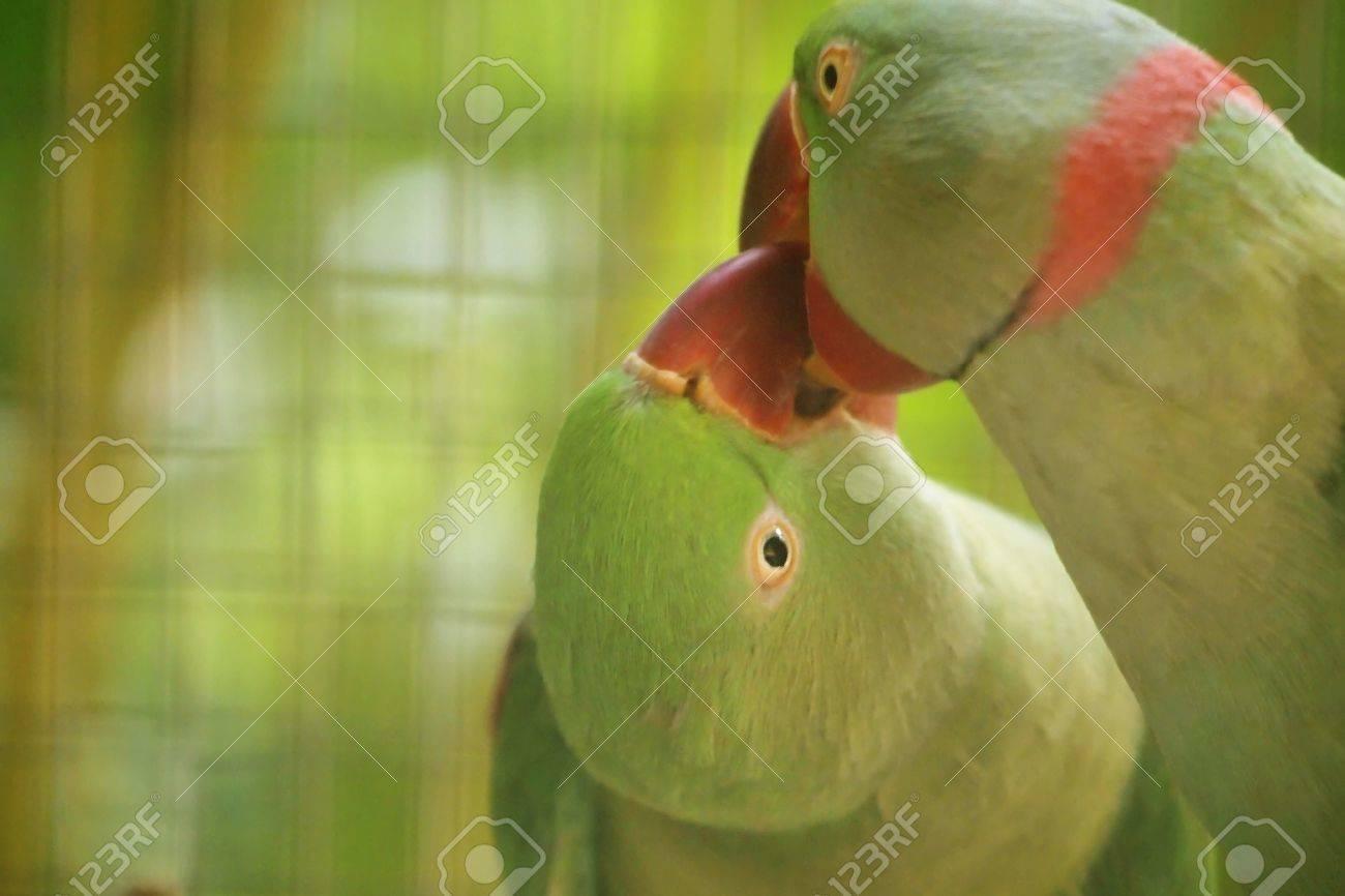 love bird Stock Photo - 11670788