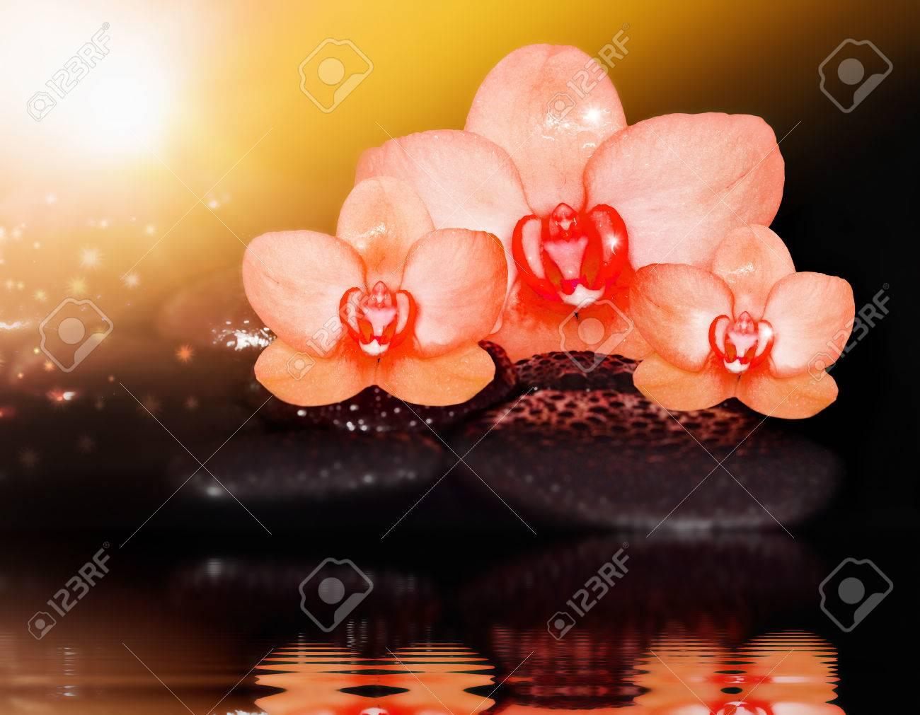 trois fleurs d'orchidées rouges et de pierres noires. banque d