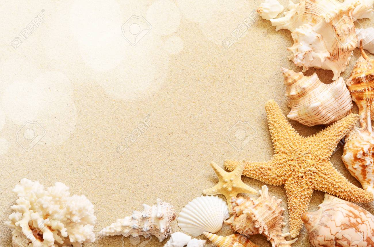 Seashore Seashells