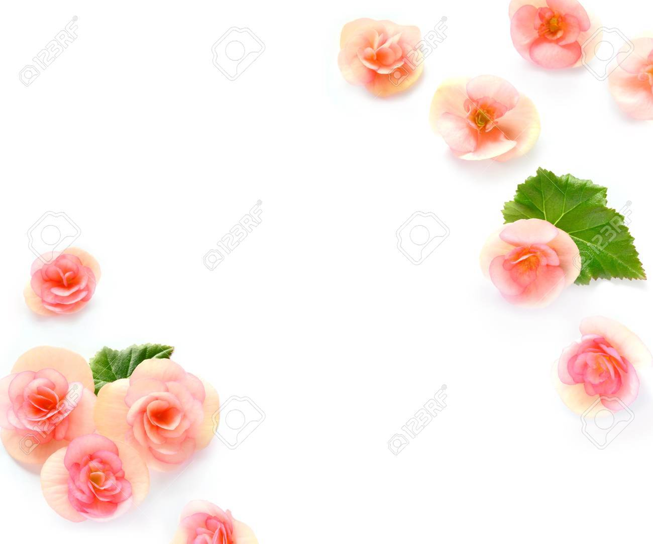 White With Flowers Begonia Background Flat Lat Top View Stock Photo Picture And Royalty Free Image Image 73064214