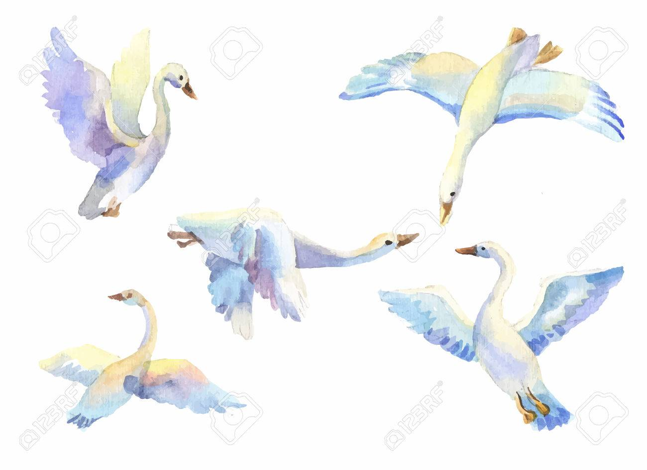 Flying Swans In Light Color Watercolor Set Of Bird Flying In