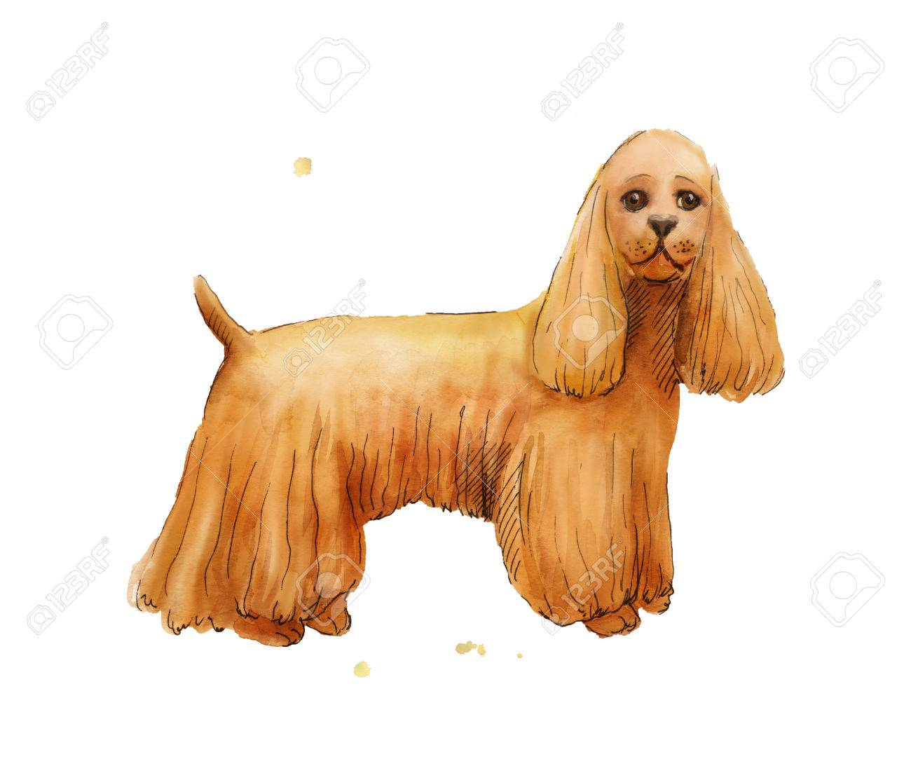 Watercolor Drawing Of Cokcer Spaniel Brown Cute Dog Illustration