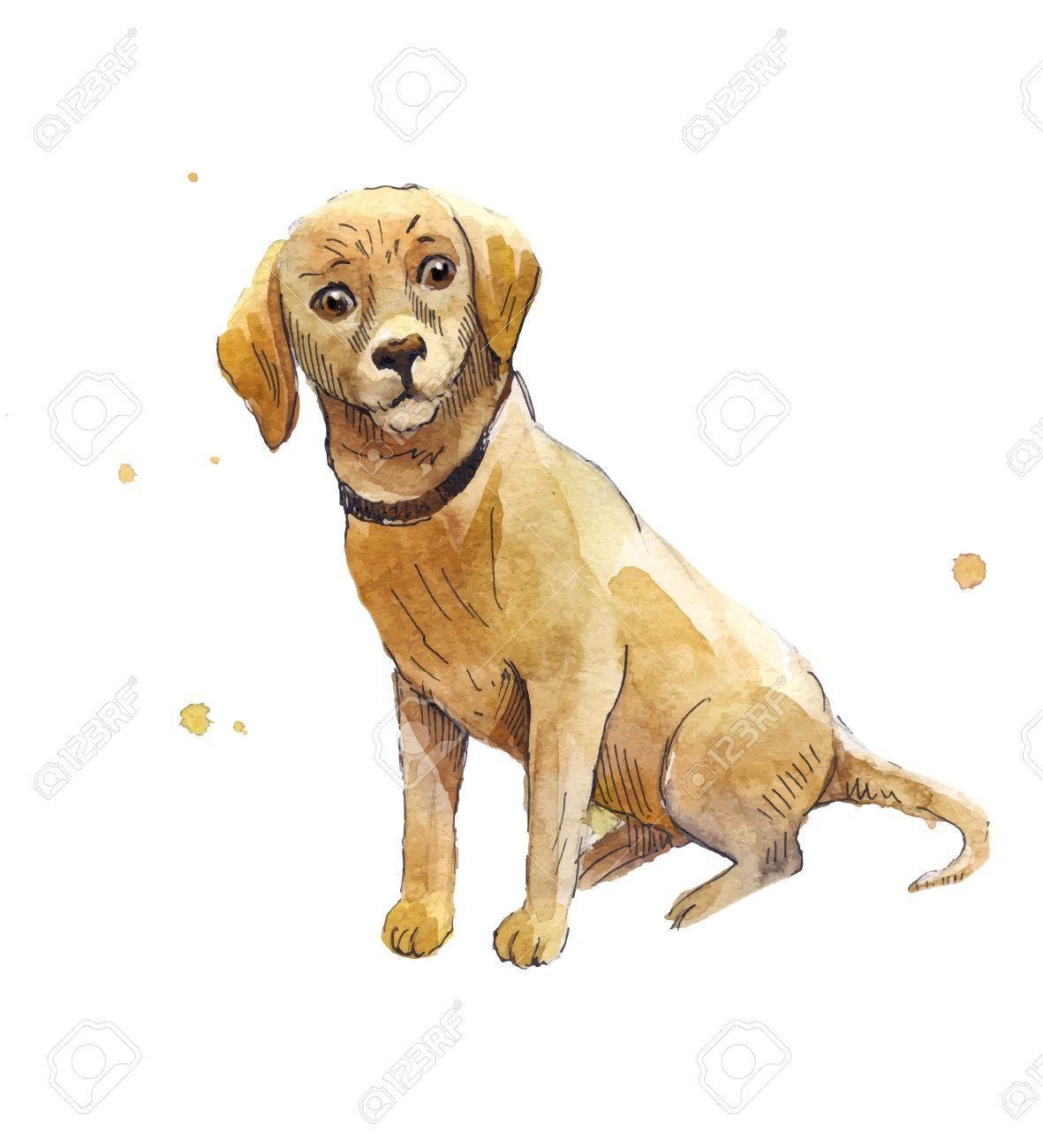Watercolor Labrador Hand Drawing A Labrador Puppy Seated Sad