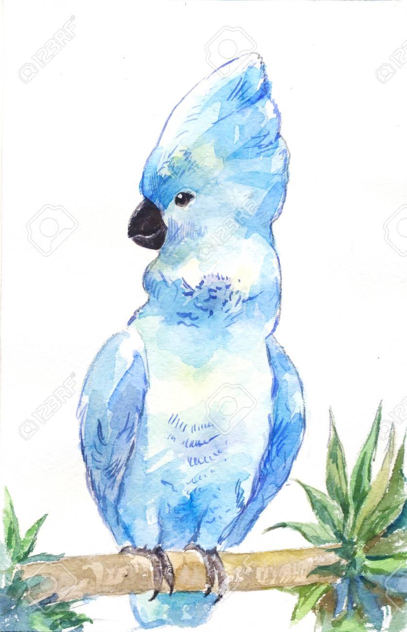 Blauer Kakadu. Aquarell Papagei, Umriss Von Hand. Illustration ...