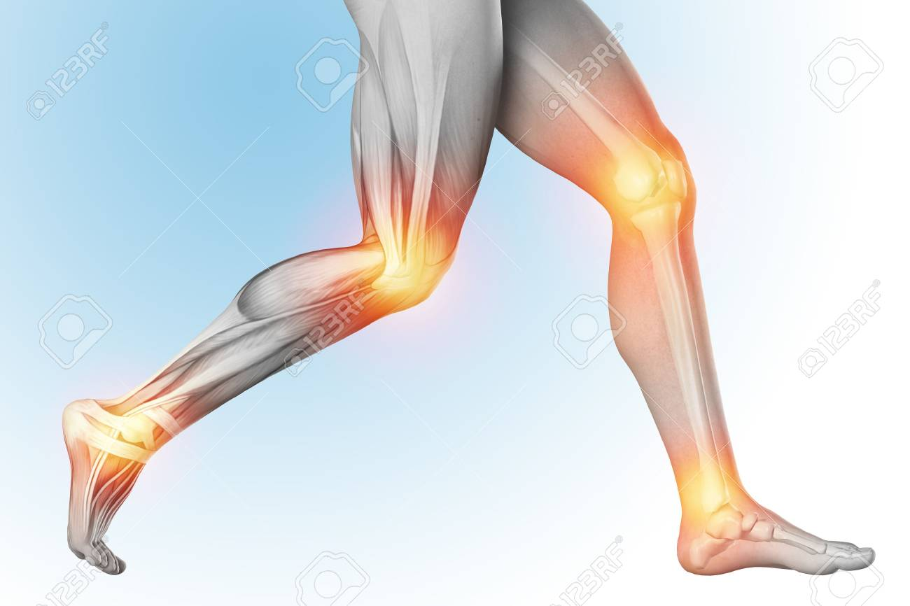 anatomia musculos de las piernas dolor