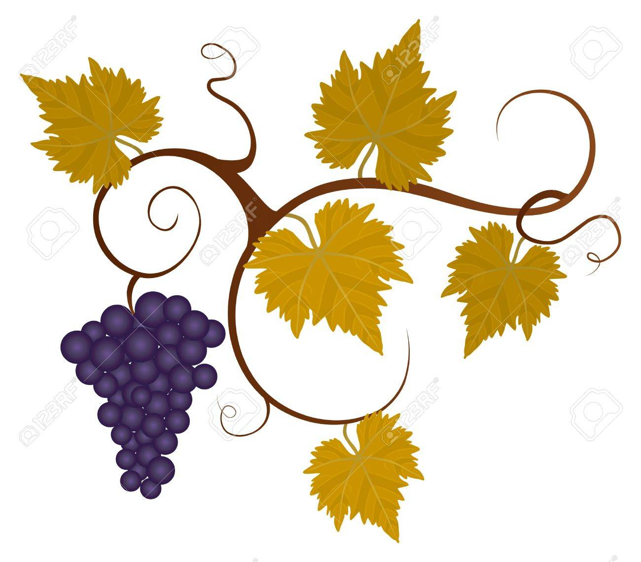 Grape vine isolated on the white background. Stock Vector - 9429743