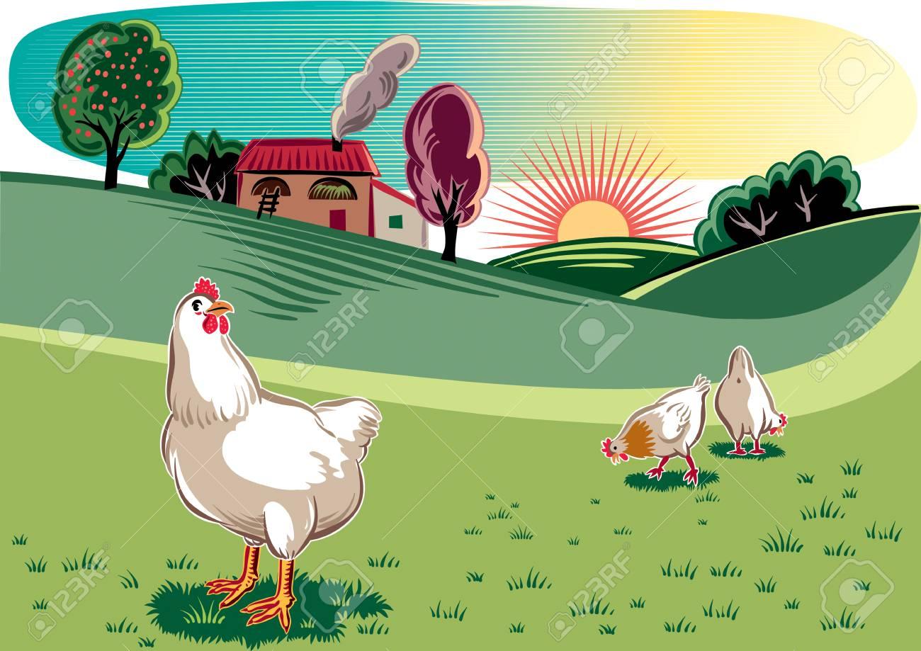 Poules Gratuites Dans Une Prairie à Laube Clip Art Libres De