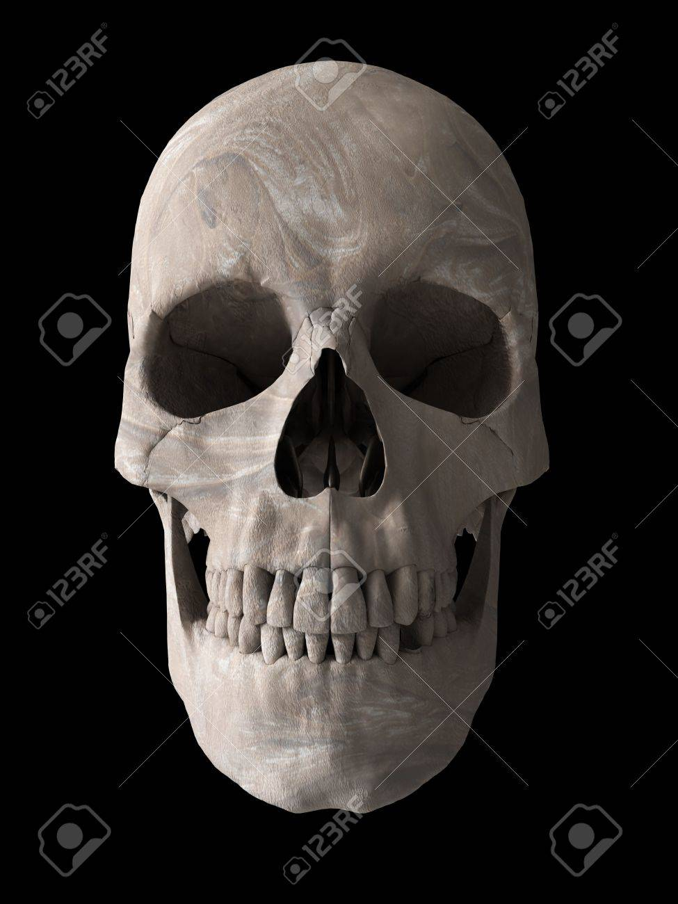 Human Skull Anatomy 3d Computer Generated Stock Photo, Picture And ...