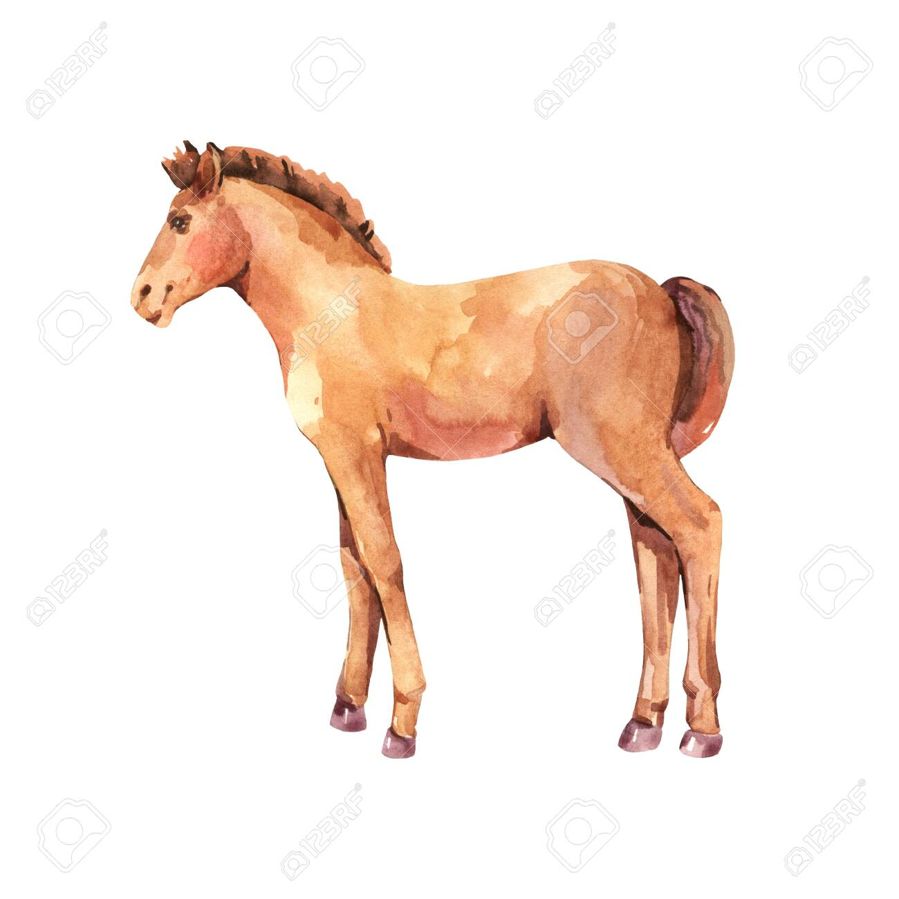 Watercolor Baby Horse Illustration Isolated On White Background Stock Photo Picture And Royalty Free Image Image 149992634