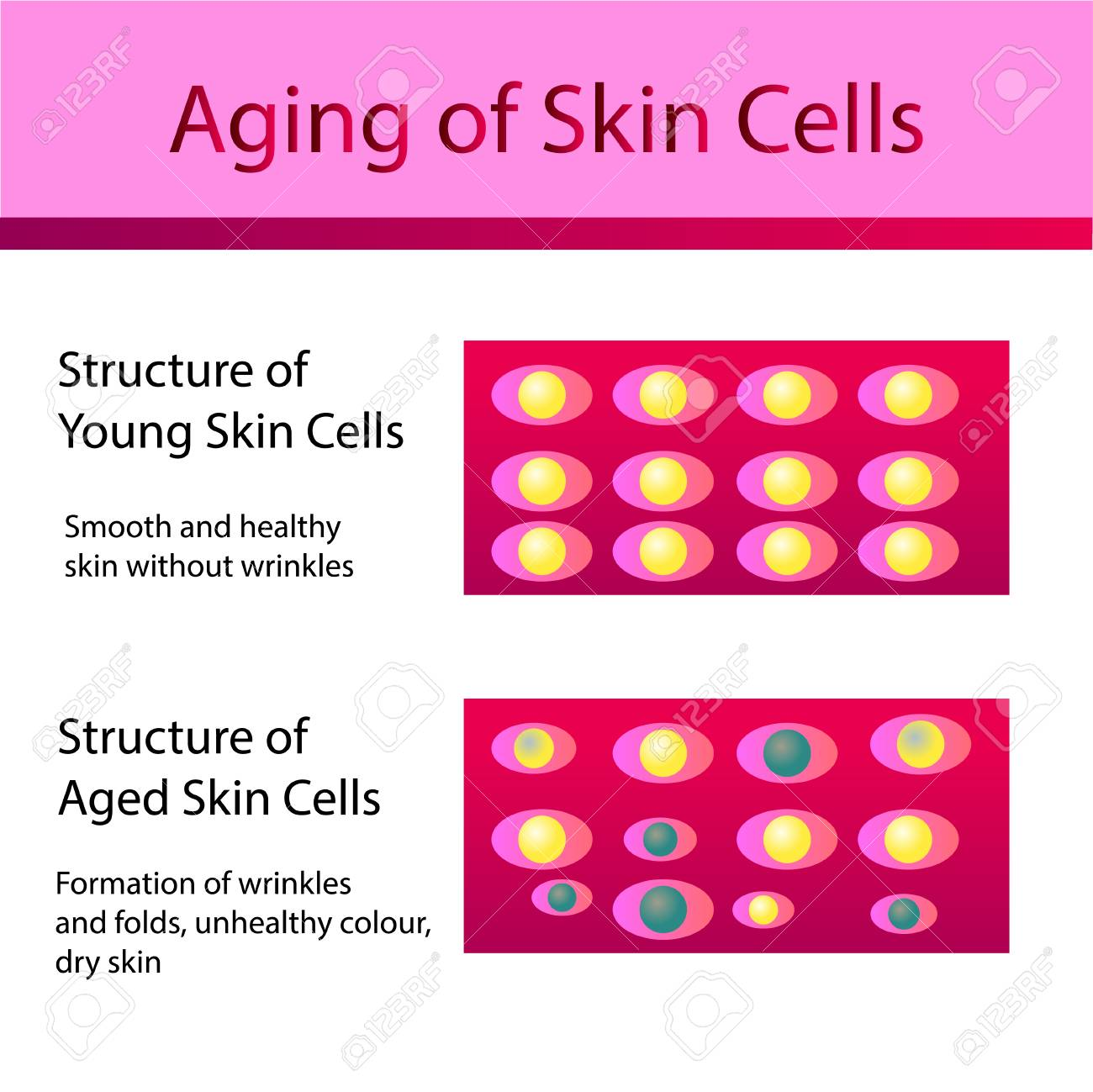 what are the two types of cells