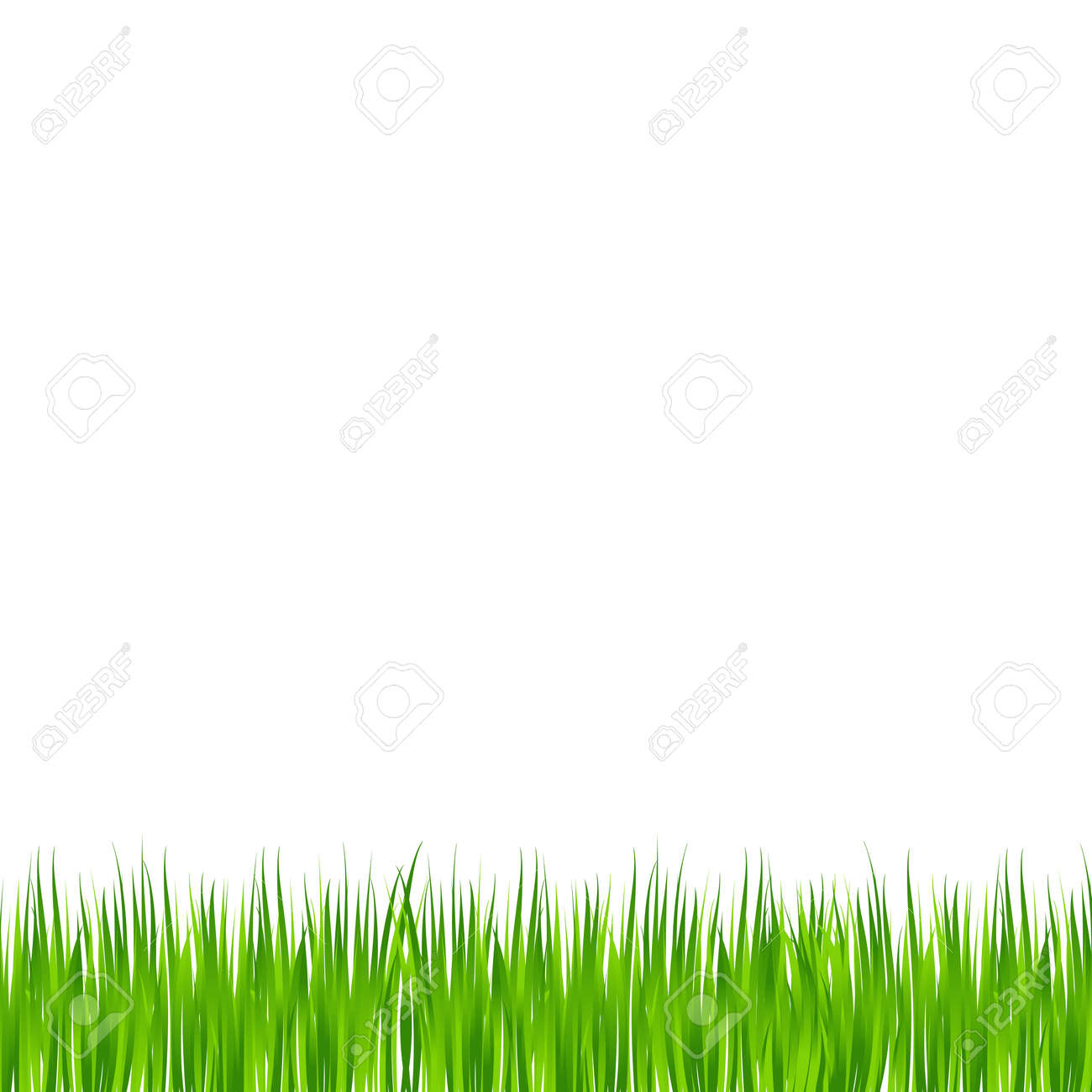 Realistic green meadow grass on white background - Vector illustration - 168677001