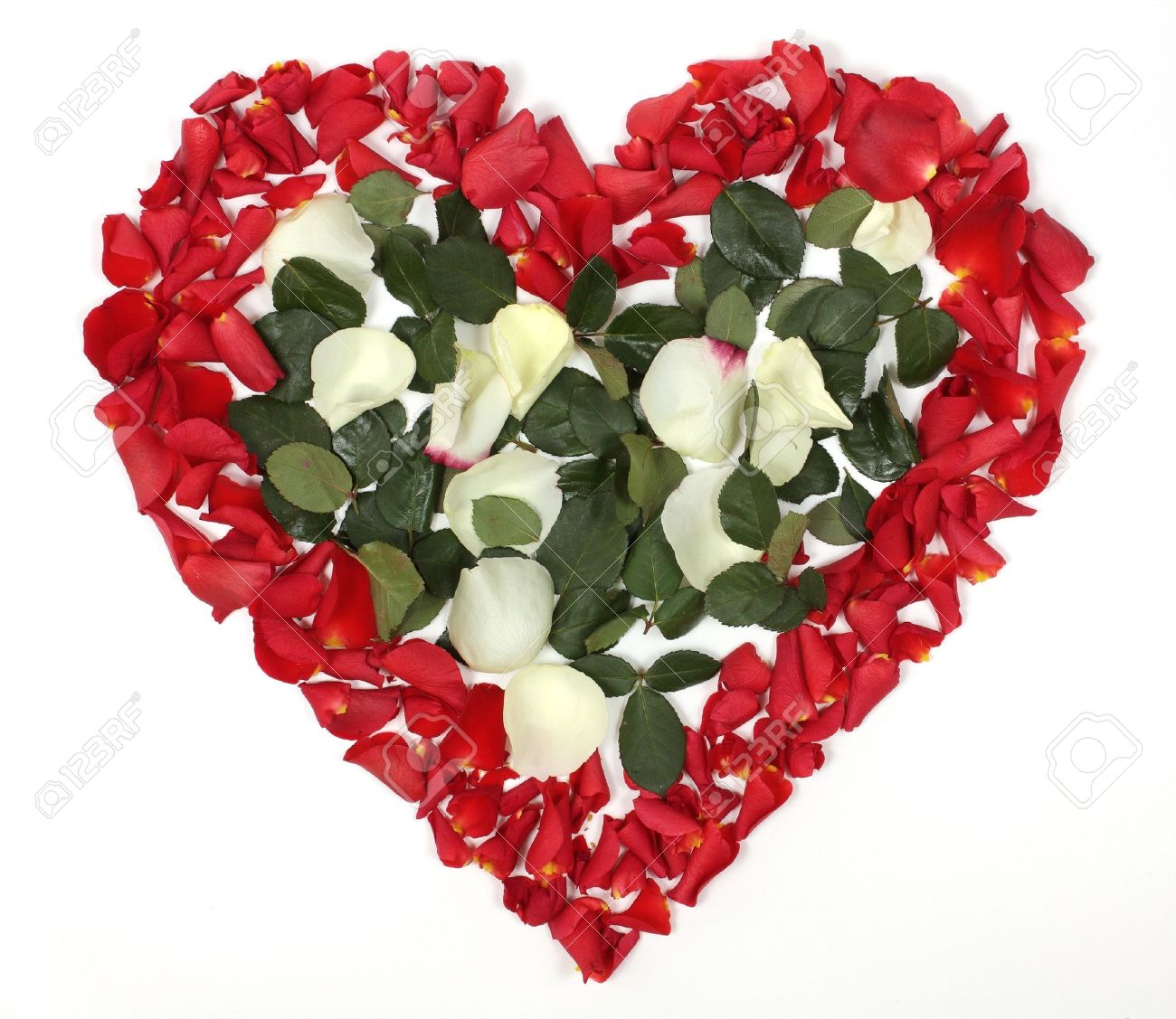 Bouquet De Rose En Forme De Coeur #6: Heart Shaped Bouquet Of Red And White Roses On White Background Stock Photo  - 13138122