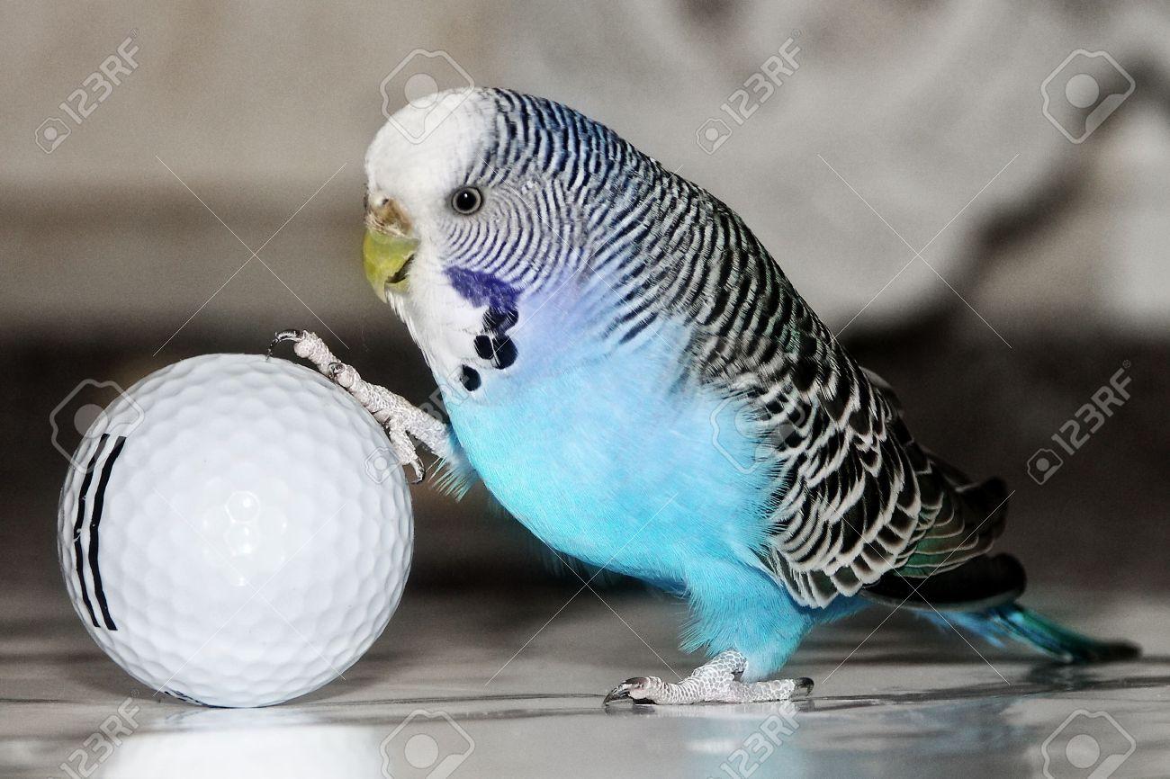 Смотри фото секс валнистава попугая 26 фотография