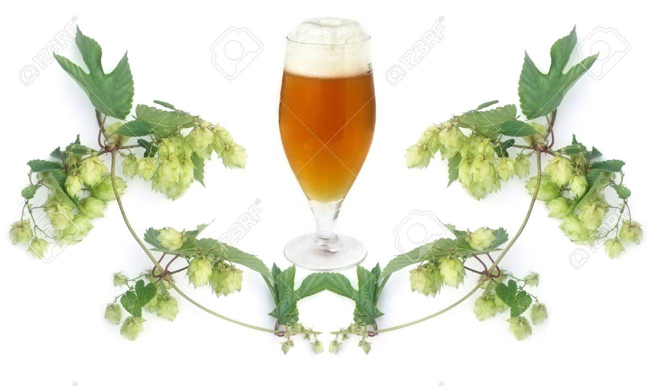 frosty golden beer in glass and hops-plant on white background Stock Photo - 6337496