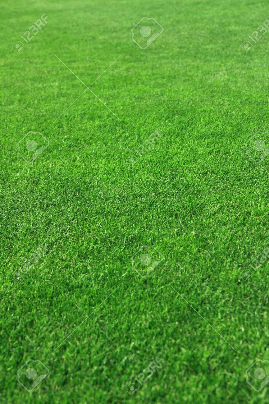 Grass on a golf course Stock Photo - 7945962