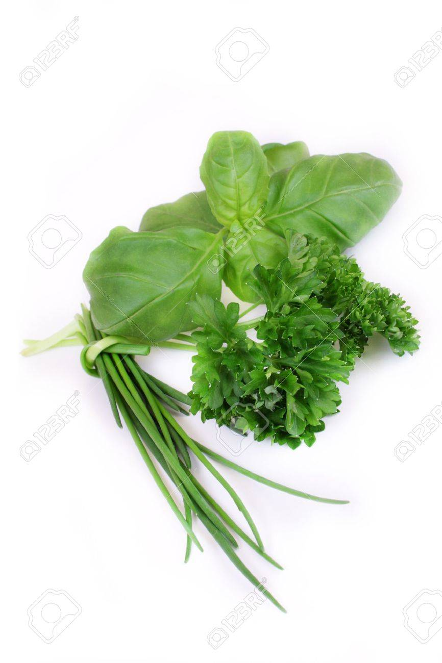 green herbs on white background Stock Photo - 7946009