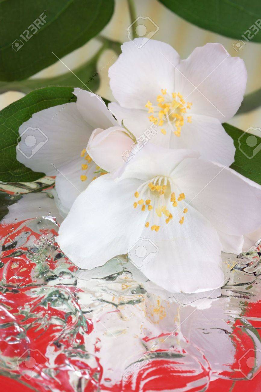 Spring flowers - white flower jasmine with reflection in the water Stock Photo - 13735359
