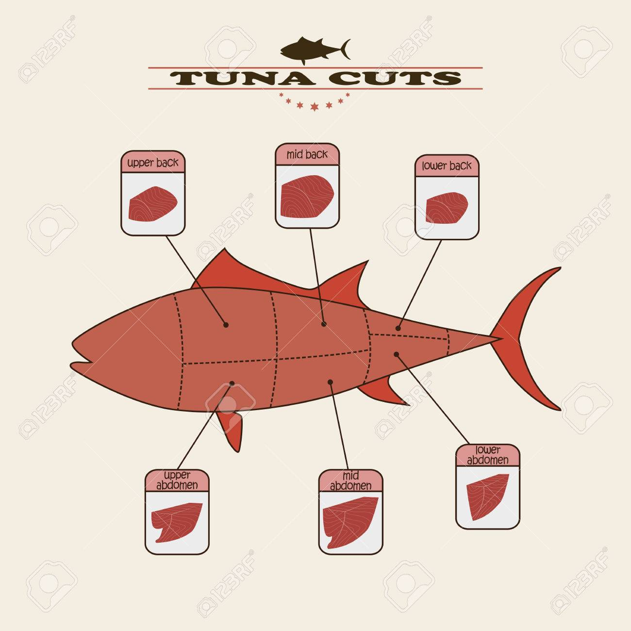 Info Graphic Of The Tuna Cuts On Light Background Royalty Free Cliparts Vectors And Stock Illustration Image 57646787