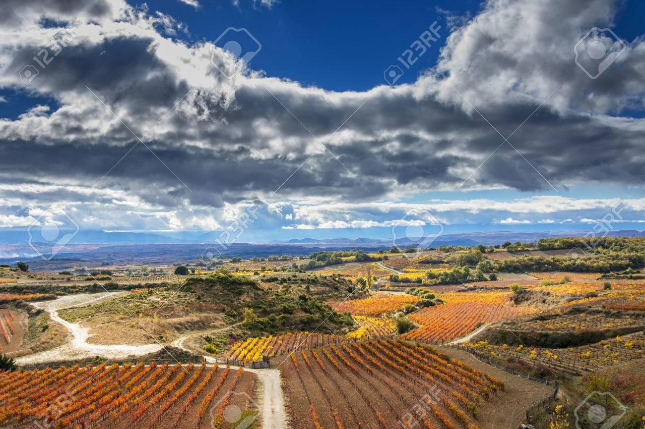 vineyards in autumn in La Rioja in Spain - 67062038