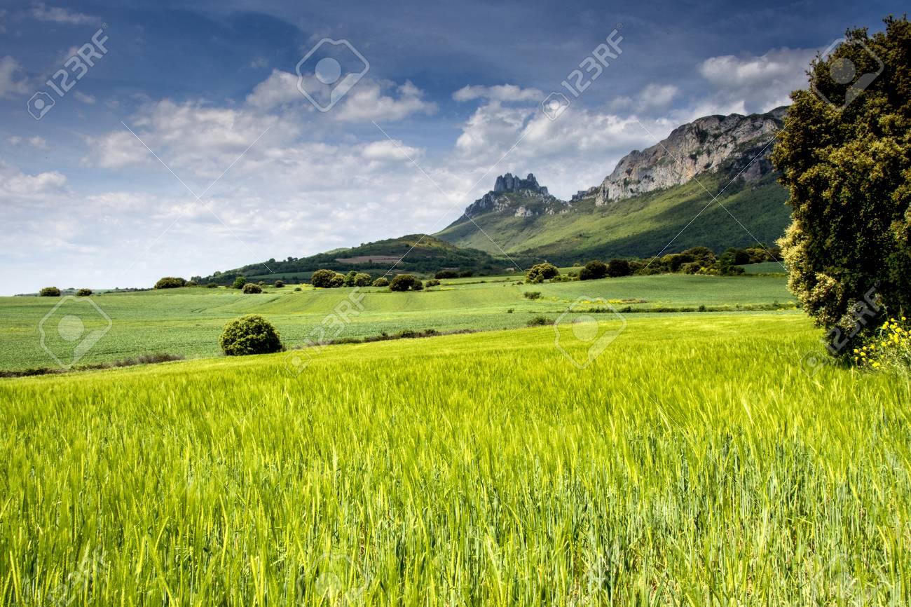 landscape in spring in Alava in Spain - 96155247