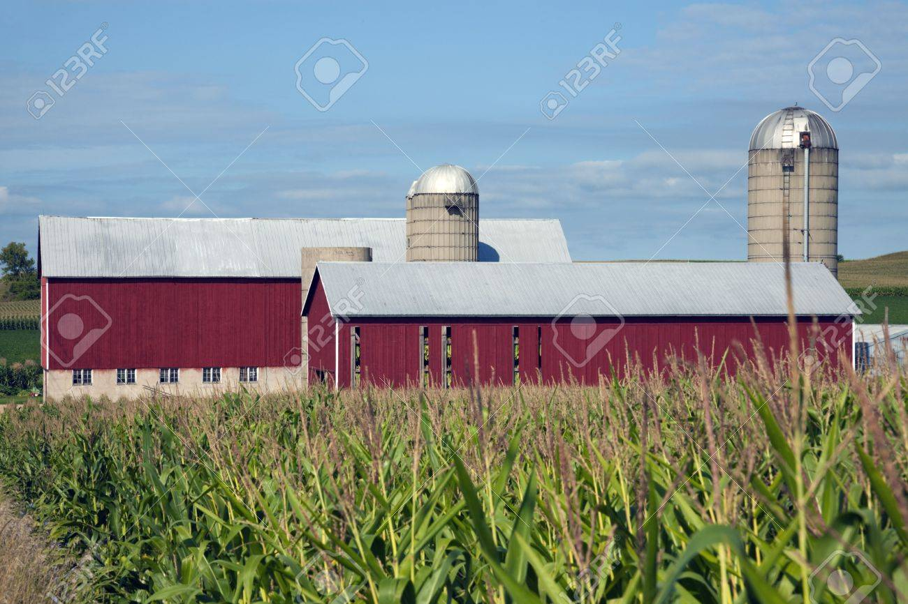 Corn and Red Farm Buildings Stock Photo - 5834729