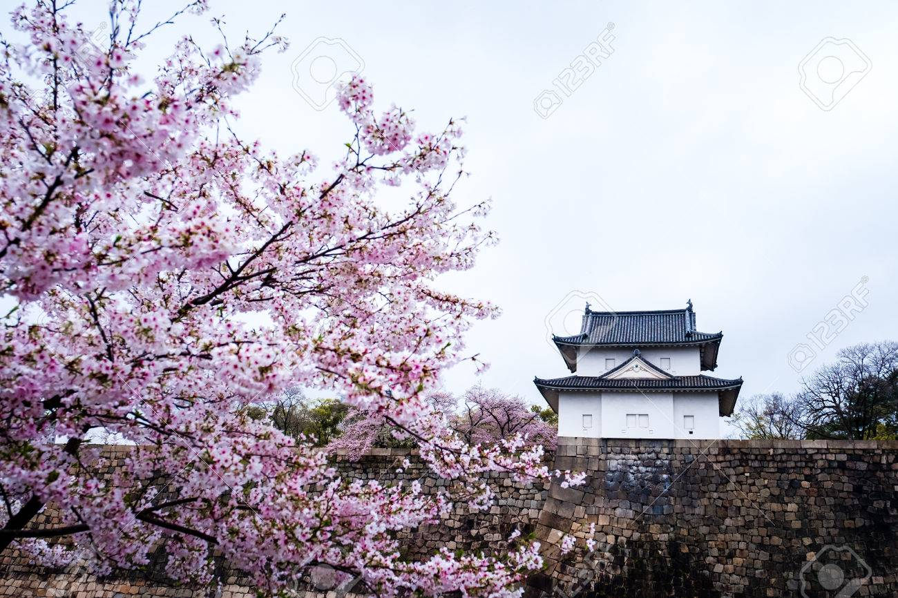 Sakura Pink Flower Or Cherry Blossom Tree In Spring At Scenery