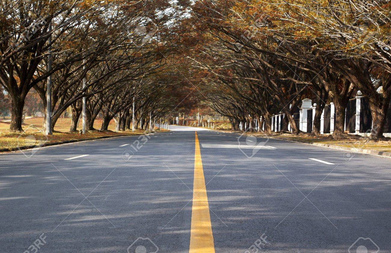 Road With Trees On Both Sides Stock Photo, Picture And Royalty ...