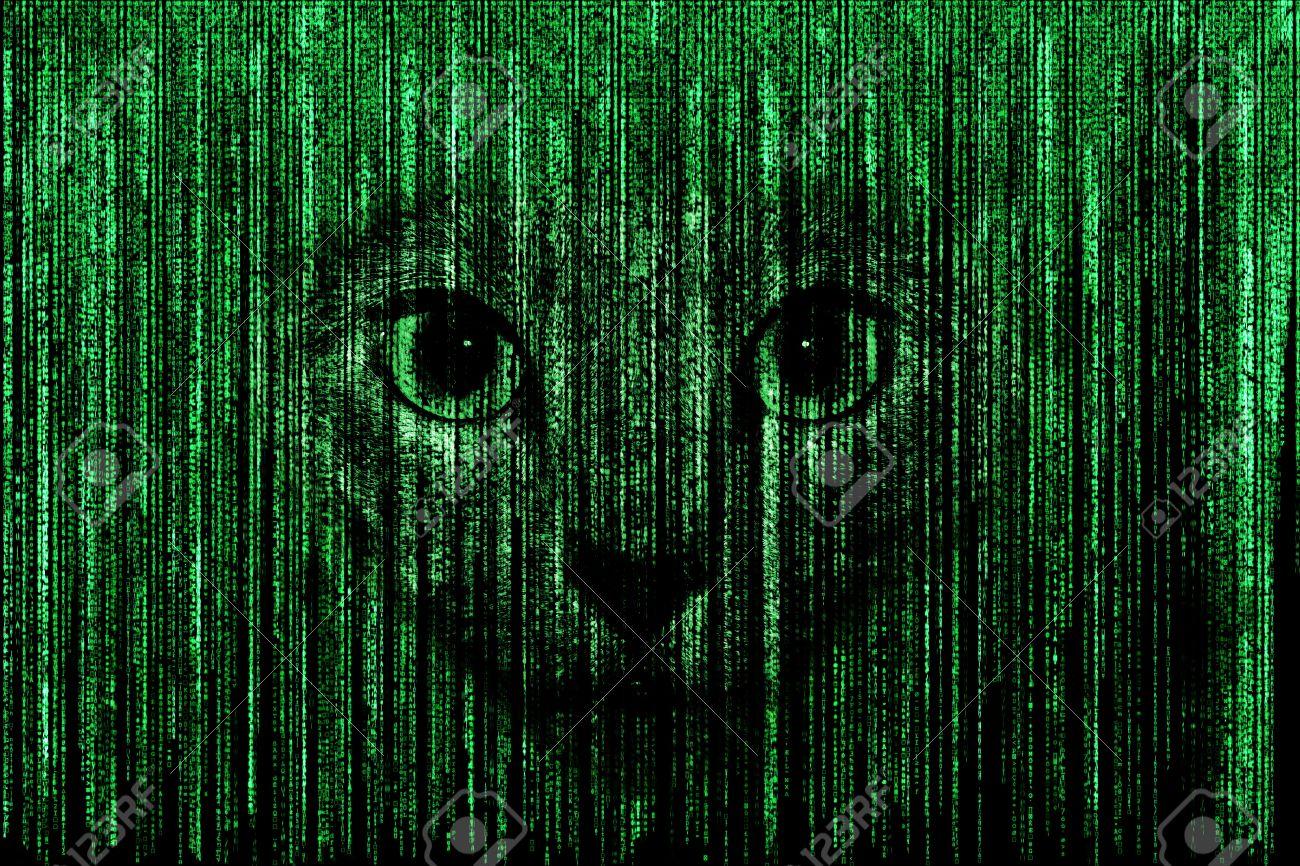 Cat face in green matrix background computer coded with symbols cat face in green matrix background computer coded with symbols and characters stock photo biocorpaavc
