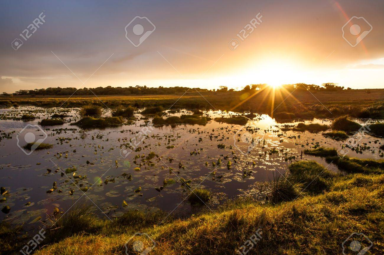 Sunset in the lake with water lilies iSimangaliso Wetland Park KwaZulu Natal South Africa. - 41591639